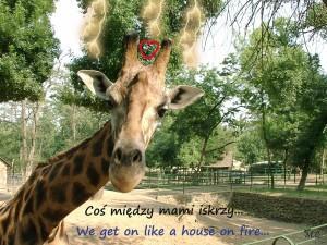 żyrafa serce ok jpg