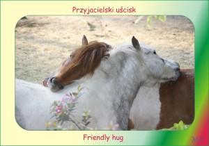 Monia konie1b
