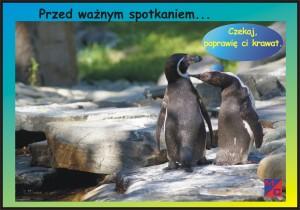 pingwin p jpg
