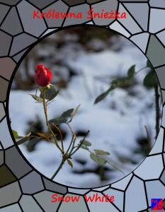 rosa 1 jpg